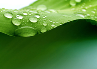 Las plantas cuentan con un sistema hidráulico vital para su supervivencia, el biólogo Guillermo Angeles Alvarez, del Instituto de Ecología, dedica parte de su investigación a estudiar esta arquitectura para identificar las especies que podrán adaptarse a los cambios climáticos o diseñar estrategias para disminuir la propagación de las plantas parásitas.