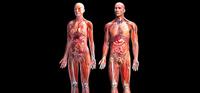 El cuerpo humano es un sistema complejo que para comprender su funcionamiento requiere de estudios integrales.