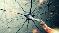 En los últimos años, estudios de neuroimagen ha empezado a explorar la conectividad funcional cerebral mediante la medición del nivel de coactivación de series temporales de resonancia magnética funcional (RMf) en estado de reposo entre distintas regiones del cerebro.