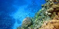 Entre los servicios ambientales que proveen los arrecifes coralinos del Parque Nacional Cabo Pulmo, en Baja California Sur, están el secuestro de carbono de la atmósfera, la exportación del peso vivo de organismos marinos y el turismo