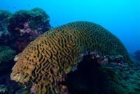 Corales escleractineos de la clase Anthozoa que se caracterizan por tener un esqueleto duro.