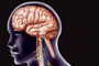 La terapia de estimulación del nervio vago se recomienda cuando el paciente tiene una epilepsia fármaco-resistente y no es candidato al tratamiento quirúrgico o no quiere someterse a una cirugía cerebral.