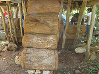 Colonias de Melipona beecheii en jobones mayas.