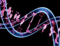 Imagen ilustrativa del genoma humano.