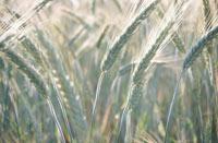El suelo agrícola del Valle en alto riesgo de salinizarse.