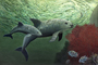 Tímida, pequeña y evasiva, la vaquita marina es una marsopa endémica de México, cuyo nombre científico es Phocoena sinus. Esta especie que llega a medir 1.5 metros y pesar 48 kilos, está en peligro de extinción y para hacer conciencia de su valor en la vida del planeta se realizará mañana sábado una procesión que saldrá del Museo Rufino Tamayo de la Ciudad de México a las 10:00 horas.