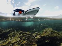 Guardaparques  vigilando el Arrecife Limones. Se muestra el  coral cuerno de alce (Acropora palmata).