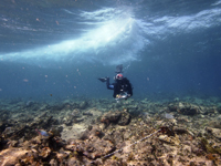 Monitoreo de un arrecife degradado.