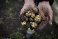 De acuerdo con el tipo de suelo se está en posibilidades de plantar ciertos cultivos. Se tiene que tomar en cuenta que unos suelos son más vulnerables a la sequía y a la contaminación.