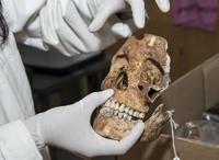 En el cráneo la parte superior de las órbitas es anatómicamente menos pronunciada en las mujeres que en los hombres, dijo la doctora Lilia Escorcia investigadora del Instituto de Investigaciones Antropológicas de la UNAM.