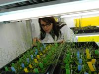 La Dra. Elena Álvarez-Buylla en su laboratorio de la UNAM.