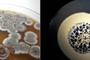 Imágenes de Streptomyces, el género más extenso de actinobacterias.