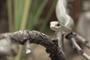 En la imagen: serpiente Dispholidus typus, la cual se encuentra ampliamente  distribuida en la región de África subsahariana, donde se le conoce como