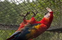 Especialistas estudian los factores que obstaculizan la reintroducción de especies en peligro a su hábitat natural.