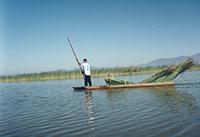 El tule recién cortado es transportado en una canoa en el lago de Cuitzeo.