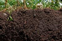 El suelo es un recurso que proporciona aire limpio a través de la vegetación que sustenta y agua potable por ser el gran filtro por el que pasa y se retiene el agua de lluvia que luego se extrae de los pozos. Al perderse la cobertura forestal de los suelos, la lluvia arrastra hacia los valles suelo y rocas, ocasionando la pérdida de suelo fértil e inundaciones en los asentamientos urbanos.