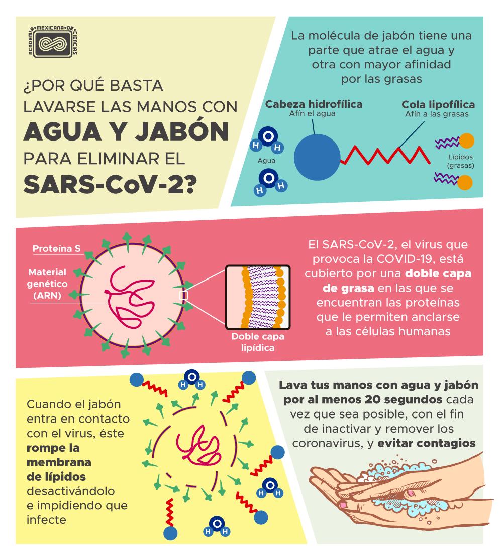 El lavado de manos con agua y jabón es una de las medidas más importantes para reducir el número de contagios de COVID-19.