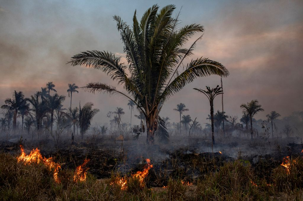 Grandes áreas de la selva amazónica de Brasil fueron quemadas para despejar el espacio para la ganadería.