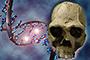 El DNA antiguo de las poblaciones prehispánicas se puede extraer de los huesos o de los tejidos, por ejemplo, de una momia, y dependiendo de la degradación de estos es posible o no obtener el DNA, en este caso mitocondrial.