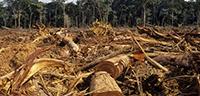 La zona del sureste es la que concentra la mayor biodiversidad del país, de ahí el interés del doctor Enrique Martínez Meyer, especialista en ecología geográfica, por estudiar el cambio de uso de suelo. La deforestación es una actividad humana con un impacto negativo sobre la diversidad biológica.