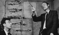 James Watson y Francis Crick trabajan en uno de sus modelos de la molécula del ADN en el Laboratorio Cavendish de Cambridge en 1953. / University of Cambridge.