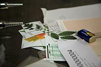 En la imagen, parte del material que los jóvenes utilizaron para calcular el área foliar y el índice de área floreal a partir de ilustraciones de hojas diferentes, en la XXVIII ONB.